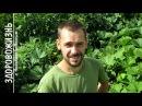 Природное ОРГАНИЧЕСКОЕ ЗЕМЛЕДЕЛИЕ В СИБИРИ. По стопам Фукуоки, Хольцера. Мой огород и добрые сорняки