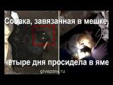 Спасение собаки. Четыре дня связанный пёс просидел в выгребной яме, пока официальные службы спасения Белгорода праздновали выходные... На помощь собаке пришли простые люди... /