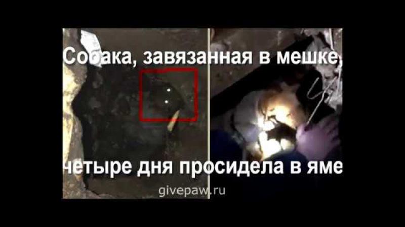 Спасение собаки. Четыре дня связанный пёс просидел в выгребной яме, пока официальные службы спасения Белгорода праздновали выходные... На помощь собаке пришли простые люди... / О собаке, человеке, и не только...