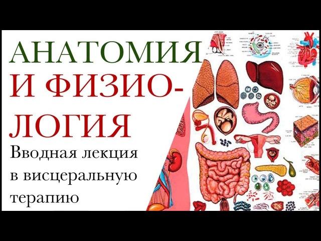 Анатомия и физиология. Вводная лекцияпо висцеральной терапии. Предтеча