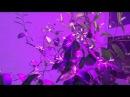 Обрезка цитрусовых растений