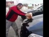 Житель Кубани помыл машину котом из мести к животному [NR]