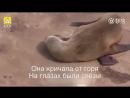 Животные и их чувства!