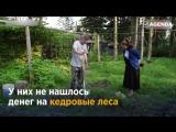 Житель Сахалина за свои деньги посадил 250 тысяч деревьев! Но власти хотят отобрать его участок, где он выращивает саженцы.