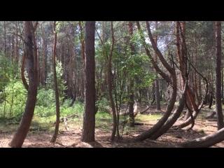 Drunk forest, Shilovo