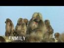 5. Дела семейные / Family Affairs (Брачные игры в мире животных / Battle of the Sexes: in the Animal World) 1999