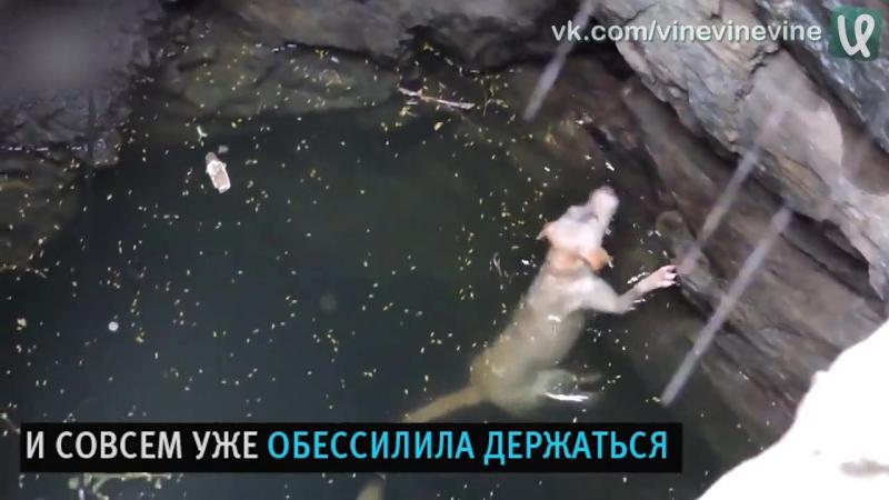 Спасение собаки из колодца