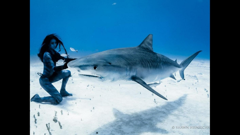 Танцы с тигровыми акулами Tigress Shark Woman Dances with Tiger Sharks
