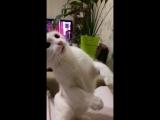 Моя кота рассердился! ))
