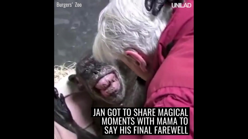 UNILAD This 59 year old chimpanzee was refusing food and ready