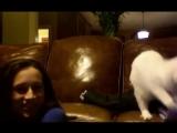 Коты и дети (подборка)