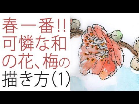 """梅の描き方 How to draw Japanese apricot 1 《実速+実況+高画質》 描き語り""""でジ 1248"""