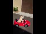 Современные собаки меня пугают (6 sec)