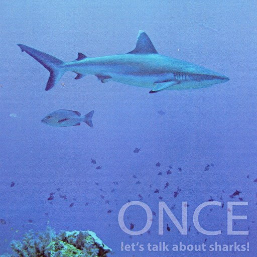 Once альбом Let's Talk About Sharks