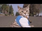 ЛУЧШИЕ ПРИКОЛЫ с котами Самые смешные ви...риколов н (720p).mp4