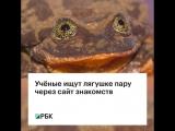 Ученые ищут лягушке пару через сайт знакомств