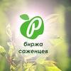 БИРЖА САЖЕНЦЕВ | plodovito.ru