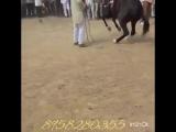 Dance of the horses. Танец лошадей Incredibly amazing