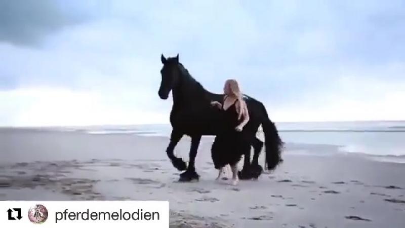 Девушка и вороной конь