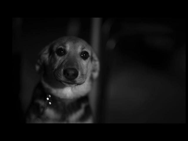 Собаки. Урок 72. Фотошкола Олега Зотова. » Freewka.com - Смотреть онлайн в хорощем качестве
