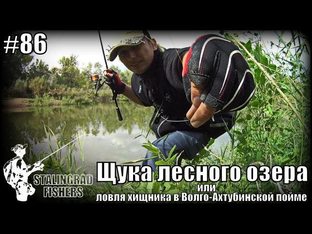 Щука лесного озера или ловля хищника в Волго-Ахтубинской пойме
