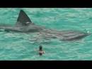 Caught on Tap 2017 - Closest Calls with the Monster Submarine Megalodon Shark From Discovery Channel
