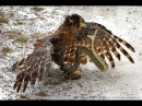 Eagle vs Giants Snake vs King Cobras ➤ Big Snake Attack :Cat ,Bird , Tiger , Leopard Compilation