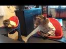 кушать хочется яванские макаки Семён и Маруся
