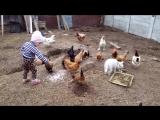 Доча кормит курочек, у бабули в гостях)
