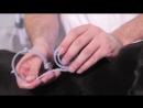 Как использовать ошейник от блох и клещей Rolf Club 3D
