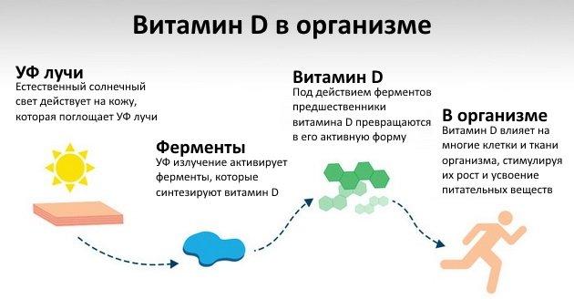 LSDLi0la1ao Витамин D: полное руководство