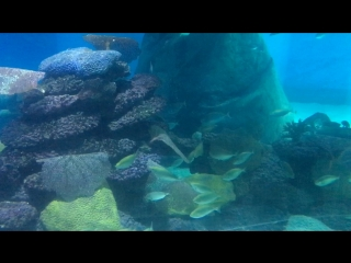 Reef in Eilat fish - scat