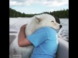 Любовь животных)))