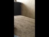 Где моя собака