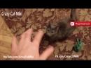Кошка играет с рукой животные видео 8