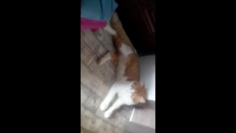 шпионю за котом