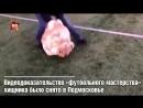 К ЧМ-2018 у России появилось секретное оружие! Так шутят в соцсетях по поводу видеоролика, на котором в футбол играет тигр