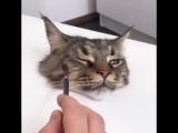 Как нарисовать кота (VIDEO ВАРЕНЬЕ)