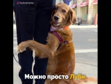 Лубутина - собака, которая любит обниматься.