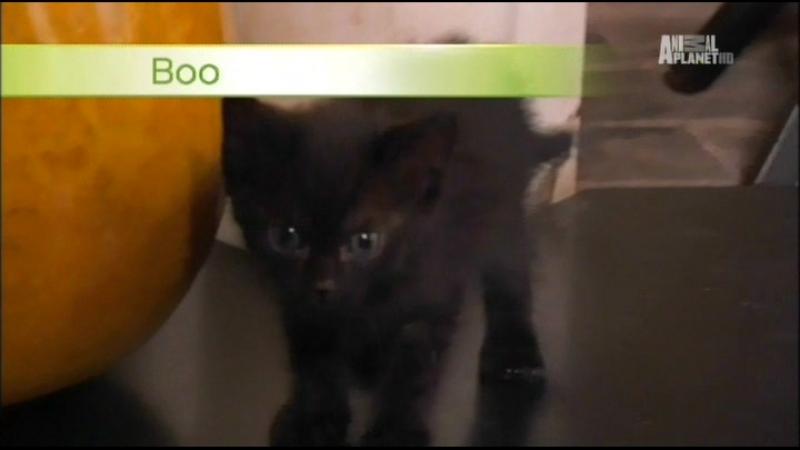 Котята и Щенки / Too Cute! (Серия №26)