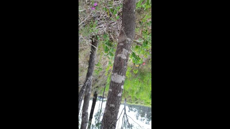 За экзотическим цветком и внутри логова термитов