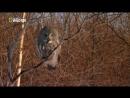Дикие животные севера: Зов природы 2 серия