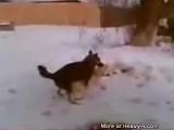 Собака трахает другую мертвую собаку