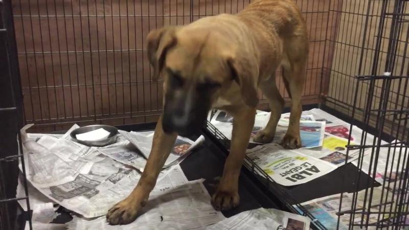 Канадцы спасли корейских собак от мясорубки