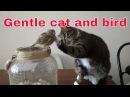 Gentle cat and bird