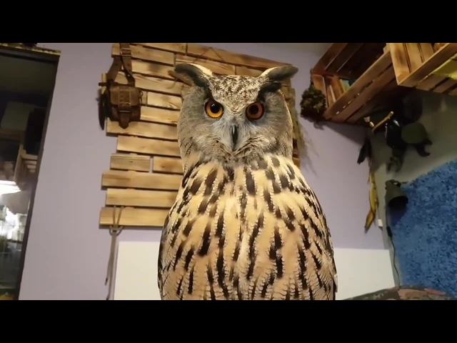 I tuch other owls