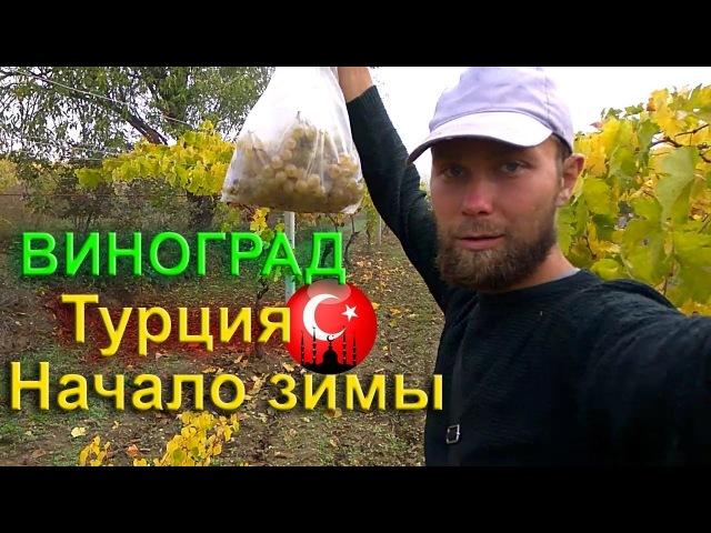 Начало зимы, виноградники в Турции. Сделали остановку в автостопе