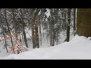Leśniczy ratuje niedźwiedzią rodzinę przed watahą wilków