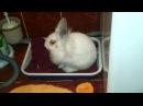 Кролик приучается к туалету Гы