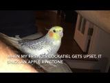 Попугай научился провожать хозяина мелодией из айфона